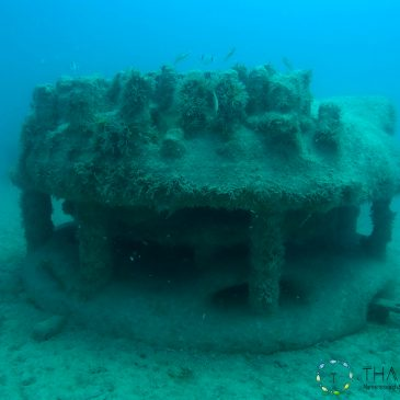 Suivi des communautés algales et ichtyologiques des récifs artificiels 3D de Monaco