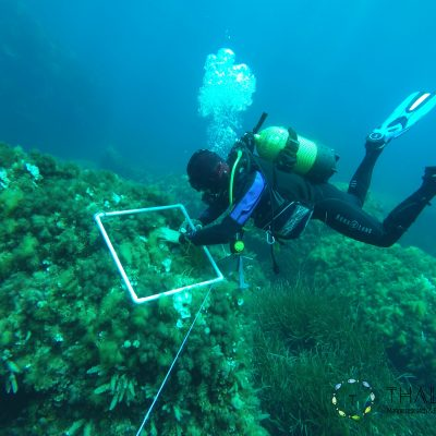 Etudes des communautés benthiques (algues et invertébrés) sur quadrat le long d'un transect