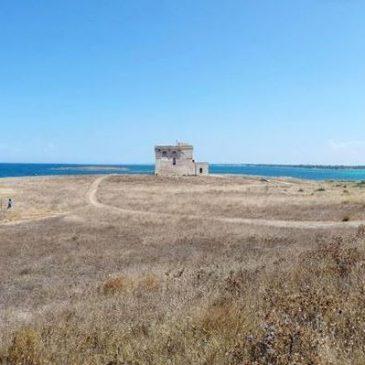 Etude des débarquements de la pêche artisanale de l'Aire Marine Protégée de Torre Guaceto (Italie)