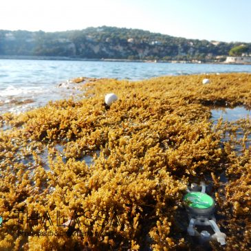 European projet ABC2 : Study of benthic assemblages at Natura 2000 network of Saint-Jean-Cap-Ferrat (France)
