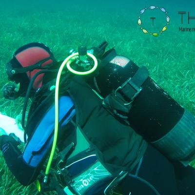 Recensement visuel des peuplements de poissons sur l'herbier de Posidonia oceanica