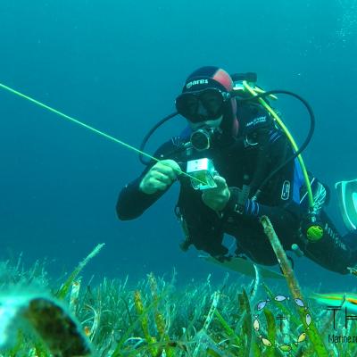 Récupérartion du transect après le recencement visuel des peuplements des poissons