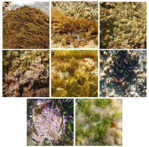 Différentes catégories de macroalgues et invertébrés de l'AME considérés pour la méthode CARLIT