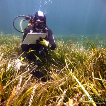 Posidonia oceanica monitoring program in the Cote d'Azur region (France)